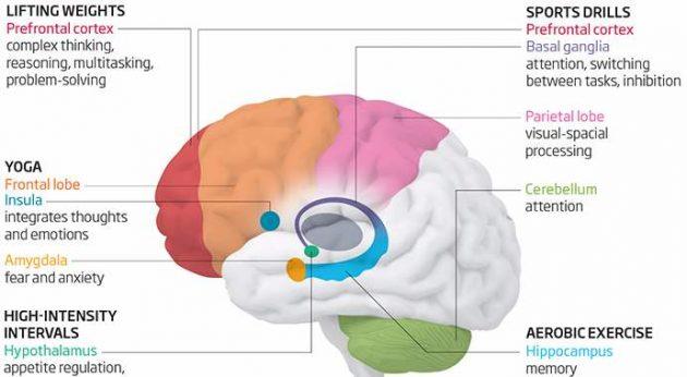 Как различные типы упражнений влияют на мозг