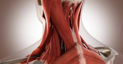 Как самостоятельно снять перенапряжение мышц шеи и устранить боль