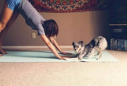 Немного йоги от животных