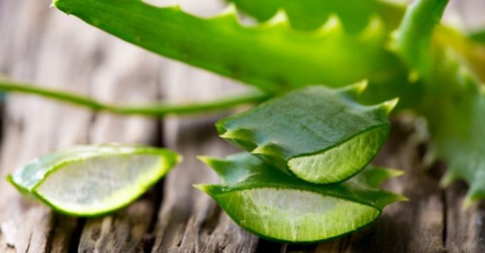 Алоэ вера: в чем преимущество для нашего здоровья?