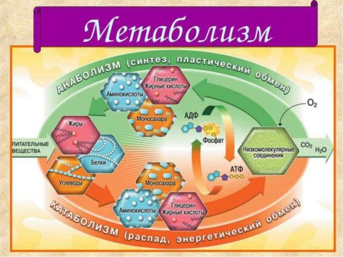 Что женщине нужно знать о метаболизме